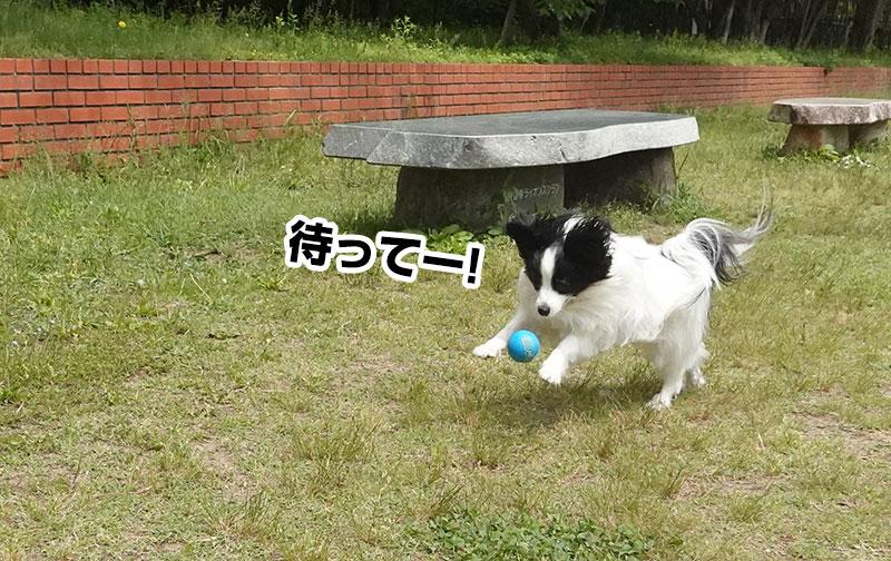 ボールを追いかける柊