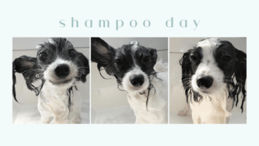 shampoo day