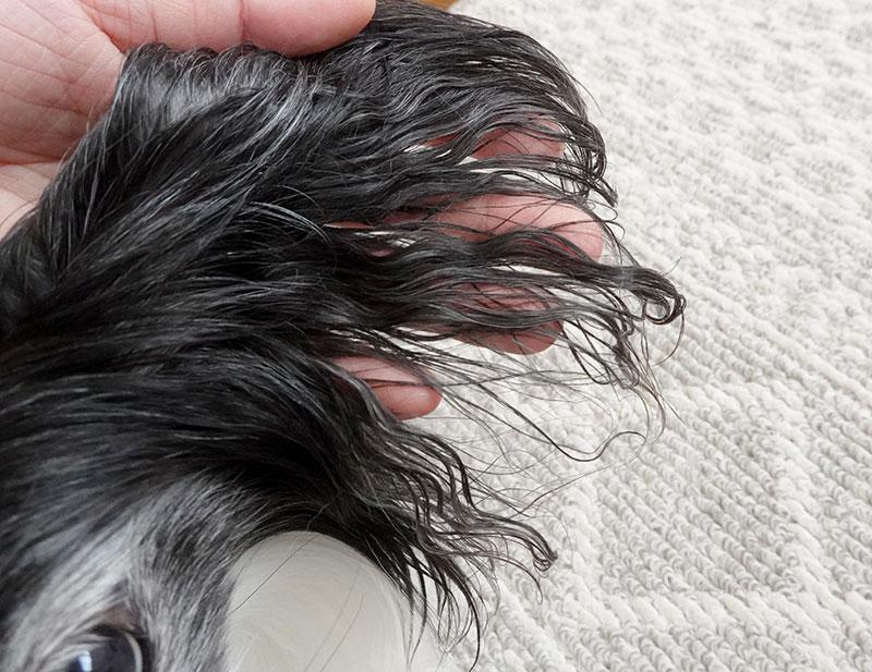 ネネの耳毛