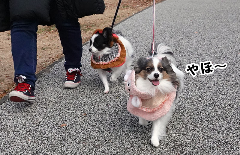 葵ちゃんと椿ちゃん