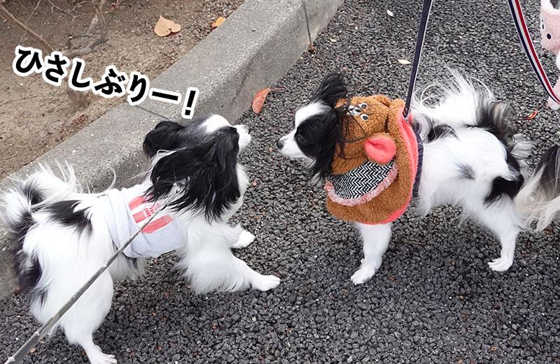 柊と椿ちゃん