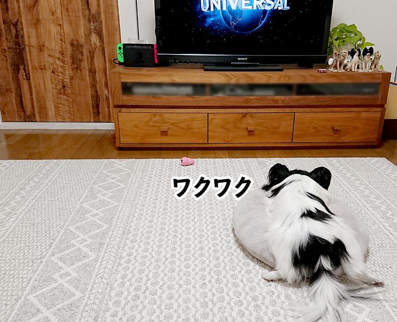 テレビを見る柊