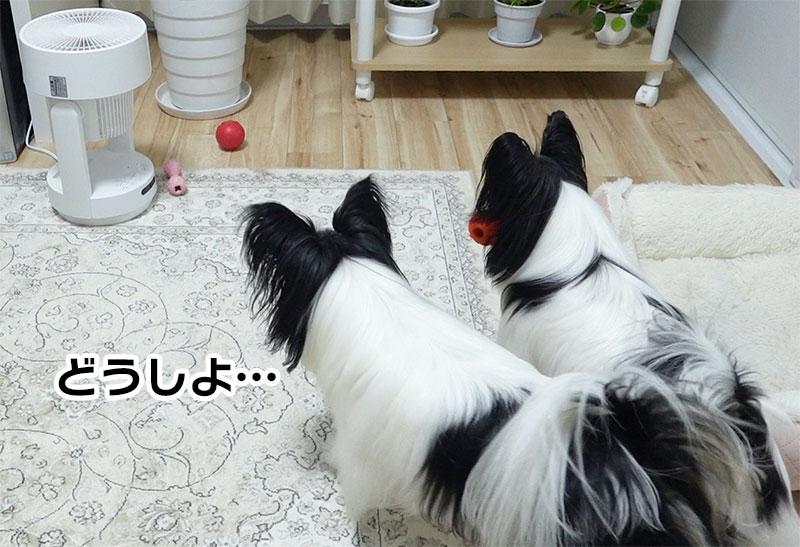 おもちゃを取りたい柊と蓮